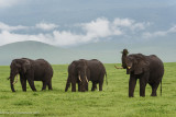 Africa-636.jpg