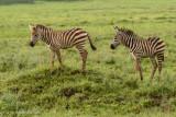 Africa-642.jpg