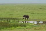 Africa-644.jpg