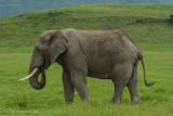 Africa-651.jpg