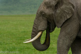 Africa-652.jpg