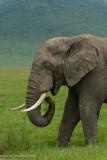 Africa-653.jpg