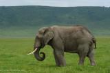 Africa-654.jpg