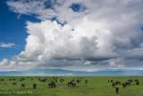 Africa-693.jpg
