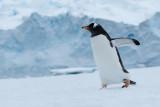 Antarctic Peninsular