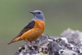 Birds in Spain