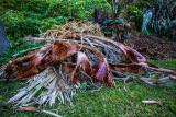 Dead palm fronds