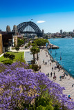 Sydney Harbour Bridge with jacaranda