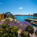 Sydney Harbour with Sydney Opera House with jacaranda