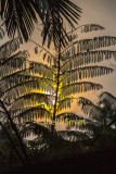 Frond with bushfire smoke with sun backdrop