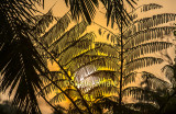 Palm frond silhouette with bushfire smoke and sun