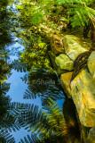 Ferns at Narrabeen