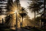 Avalon playground with sunbeams through palms