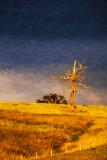 Dead tree in paddock