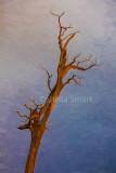 Single dead tree