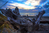 Dead tree on beach at Greymouth, New Zealand