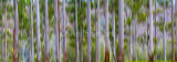 Australian gum trees abstract