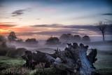 Dead tree at sunrise with mist