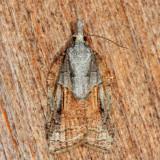 3740 - Tufted Apple Bud Moth - Platynota idaeusalis