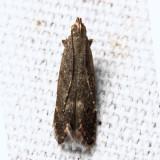 2222 – Syncopacma palpilineella