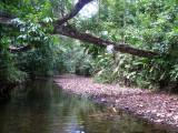 Rio Platanares - there were white ibis on fallen tree