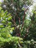 Tree along river,