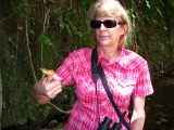 Julie caught a Gladiatior Tree Frog
