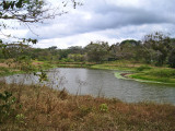Whistling duck pond