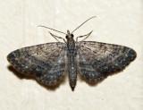 7459 - Eupithecia columbiata (male)