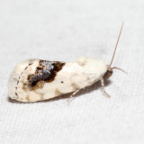 9095 – Small Bird-dropping Moth – Ponometia erastrioides