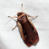 10891 - Flame-shouldered Dart - Ochropleura implecta