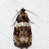 2812 – Olethreutes valdanum