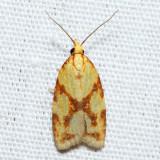 3695 – Sparganothis Fruitworm Moth – Sparganothis sulfureana