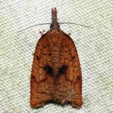 3706 – Mosaic Sparganothis – Sparganothis xanthoides (dark individual)