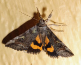 8873 – Similar Underwing – Catocala similis
