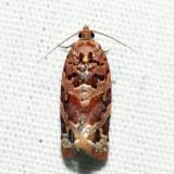 3603 – Jack Pine Tube Moth – Argyrotaenia tabulana