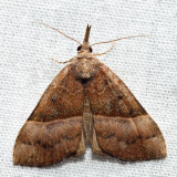 8455 – Red-footed Snout -  Hypena eductalis