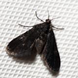 4754 – Elophila tinealis