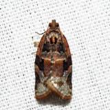 3597 – Red-banded Leafroller - Argyrotaenia velutinana*