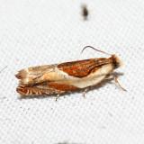3366 - Ancylis laciniana *