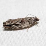 3259 - Arrowhead Moth - Gretchena deludana *