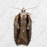 3542 - Masked Leafroller - Acleris flavivittana *