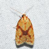3695 - Sparganothis Fruitworm Moth - Sparganothis sulfureana *