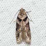 Pseudotelphusa 6.12.1