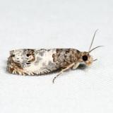 3208 - Doubleday's Notocelia - Notocelia rosaecolana *