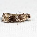 2821 - Serviceberry Leafroller - Olethreutes appendiceum 6.27.11