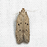 1852 - Ten-spotted Honeysuckle Moth - Athrips mouffetella 6.30.22