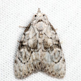 Moths Unidentified July 2016