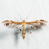 6102 – Dejongia lobidactylus 7.4.7