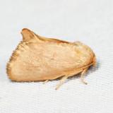 4653 – Red-crossed Button Slug Moth – Tortricidia pallida 7.4.15